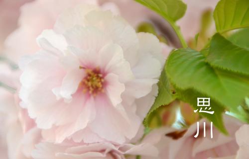 201204osaka_1415.jpg
