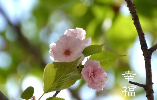 201204osaka_1424.jpg