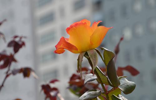 201212_0372.jpg
