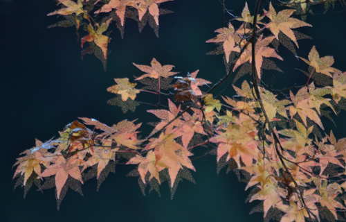 201212_9723ed1.jpg