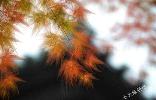 201212_9824.jpg
