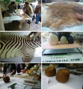 0426yokohamap動物園展示物