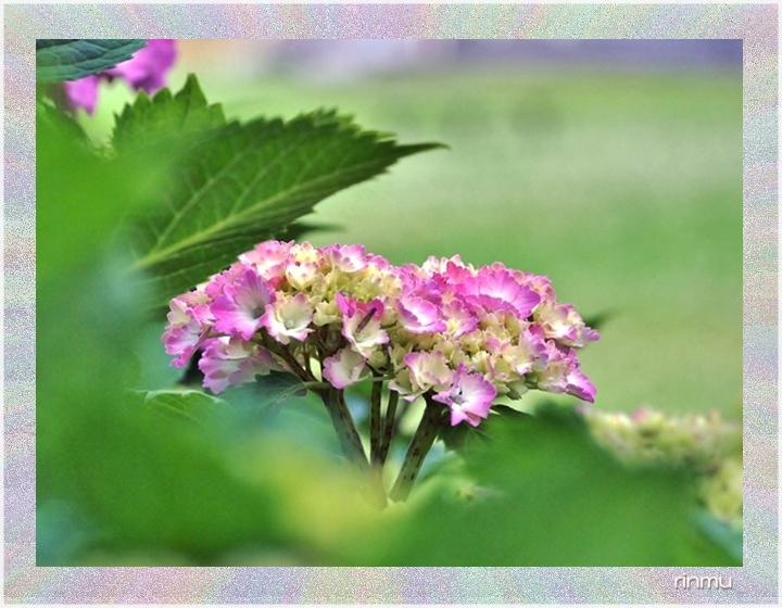 765○10拡散ネーム2紫陽花
