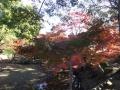 1122奈良公園