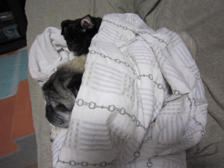 寒いから一緒に寝よ