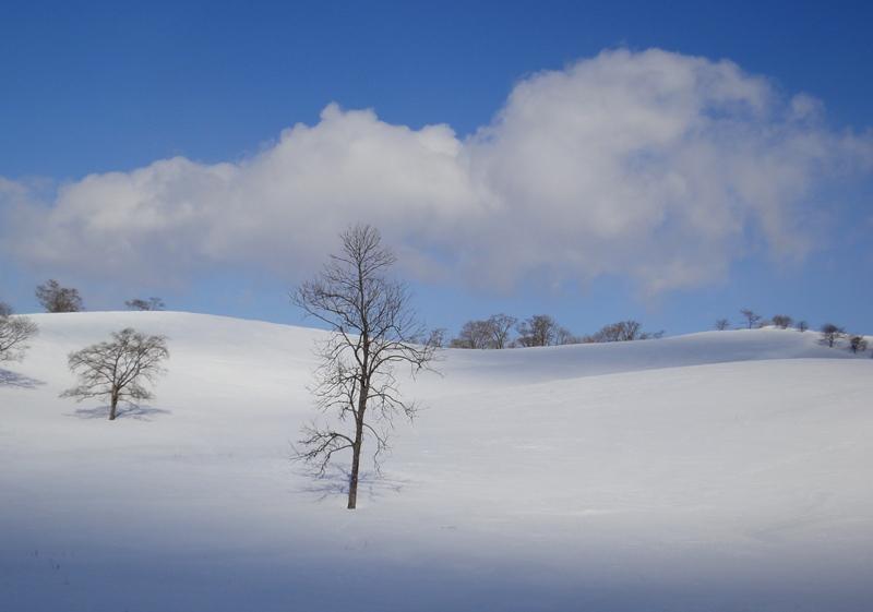 雪の丘130217
