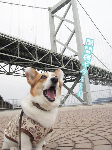 関門橋キタ~