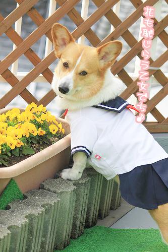 花も恥じらう