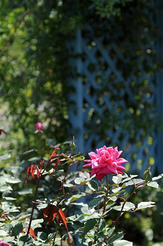 DSC_0032-s_20121011195032.jpg