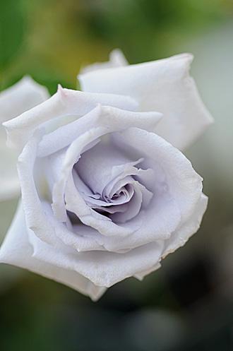 DSC_0064-s_20121113193555.jpg