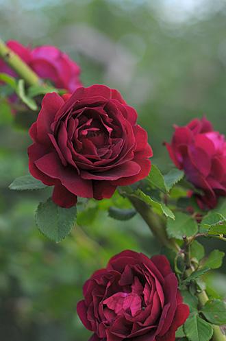 DSC_0073-s_20120916145247.jpg