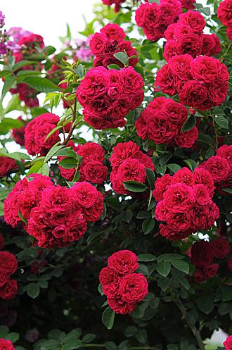 DSC_0103-s_20120624210656.jpg