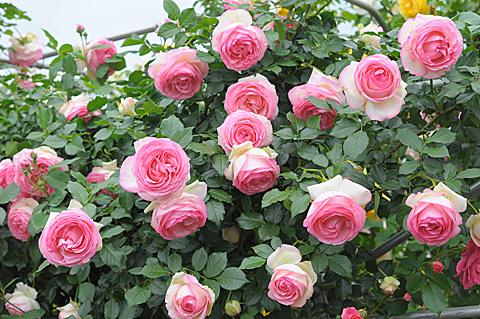 DSC_0103-s_20120625202606.jpg