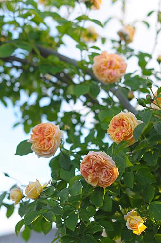 DSC_0105-s_20120610204510.jpg