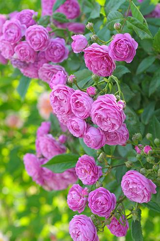 DSC_0124-s_20120608144028.jpg