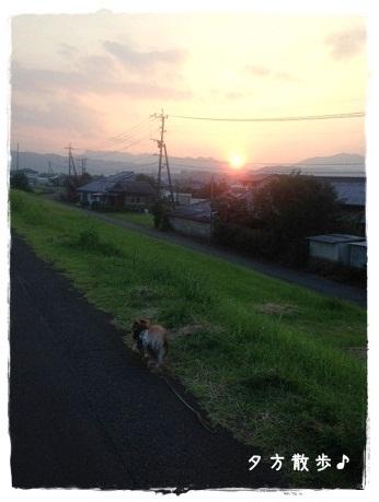 ツナお散歩