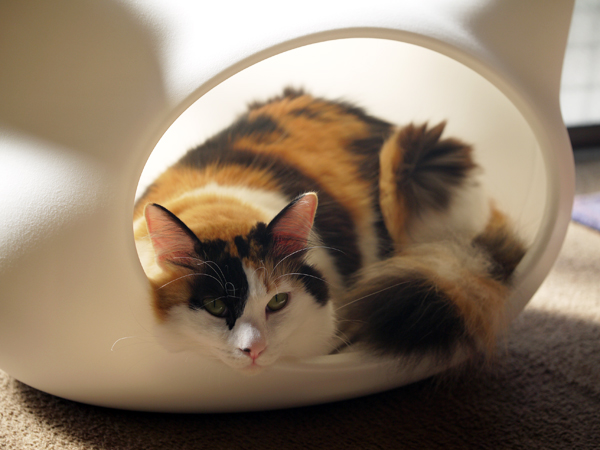 猫ハウス寝