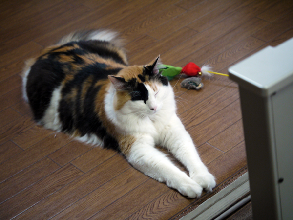 サンルミエの番猫