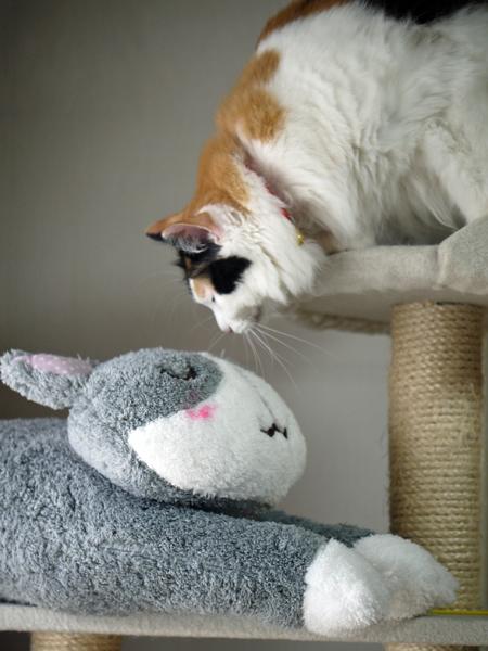 100円の猫クッション