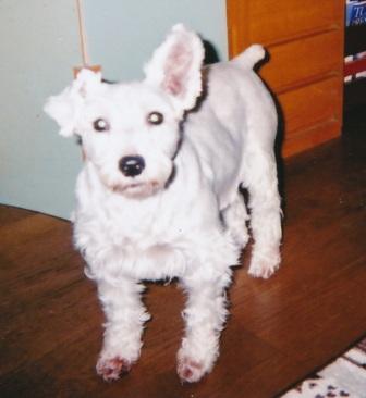 20100610迷子犬