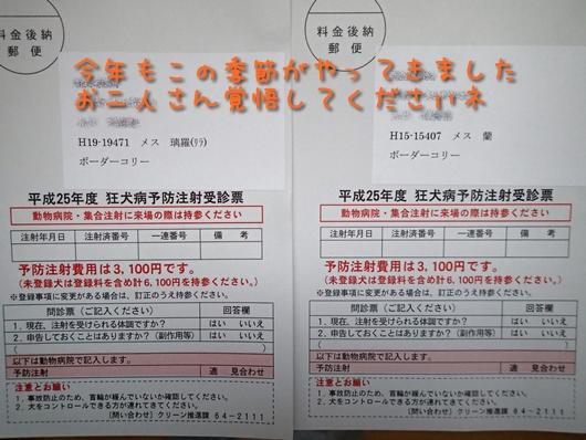 狂犬病予防接種ハガキ