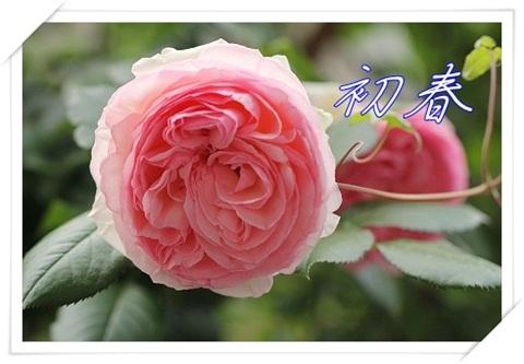 IMG_5296a.jpg