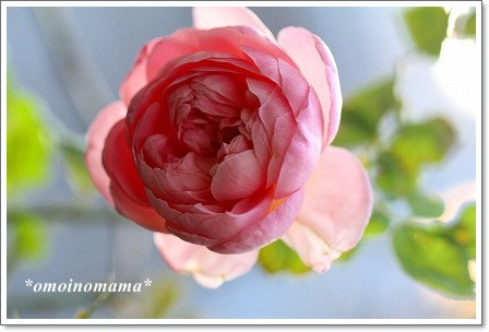 IMG_6788_20121017195940.jpg