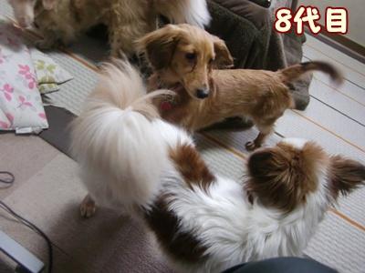 2012_0227_124839-CIMG8990.jpg