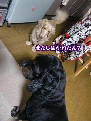 2012_0325_182958-CIMG9652.jpg