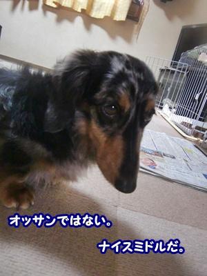 CIMG0126_20120501175657.jpg