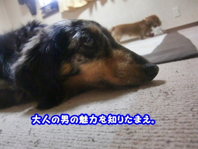 CIMG0129_20120501175656.jpg