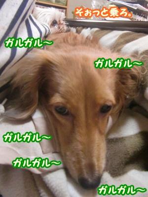 CIMG3230.jpg