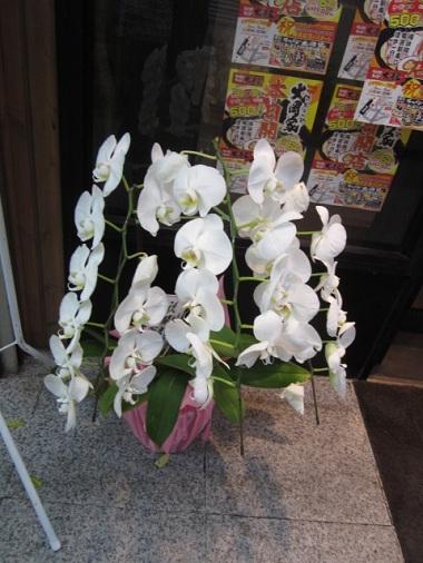 ohokaya4.jpg