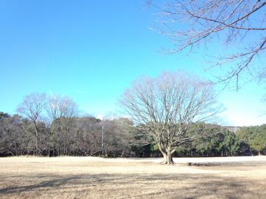 FC2-koukuu1.jpg