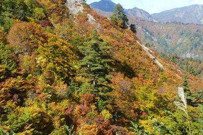 白山スーパー林道2