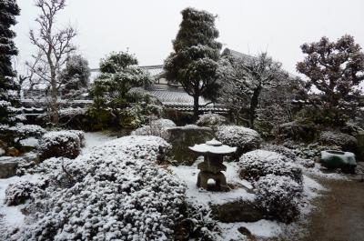 雪化粧した庭