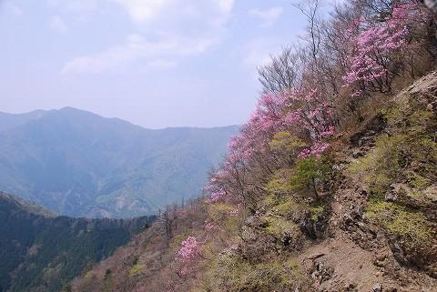 アカヤシオ2008.4.28