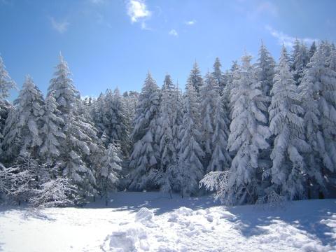 周囲の樹氷