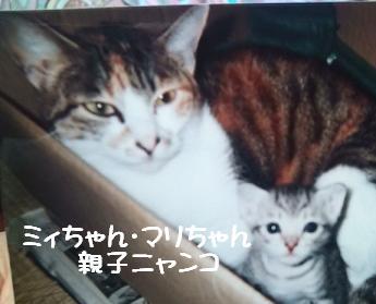 ミィちゃん・マリちゃん親子2