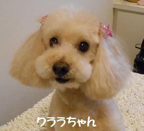 渡辺クララちゃん2