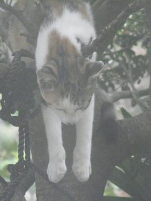 005_convert_20120906150749猫