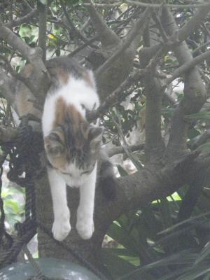 007_convert_20120906151112猫3