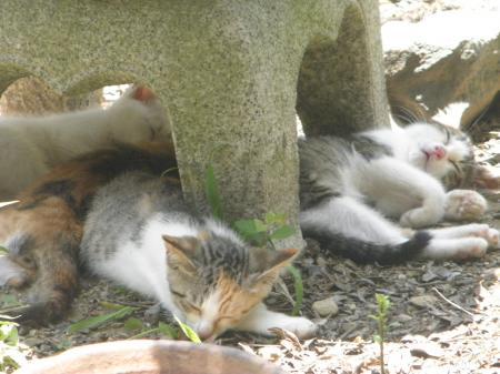 P7010243_convert_20130703131036子猫