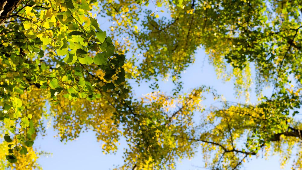 20121115-IMGP3835.jpg