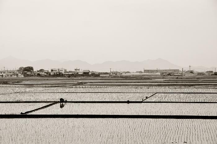 西条市石田 田植えの風景