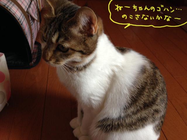 momo14010702.jpg
