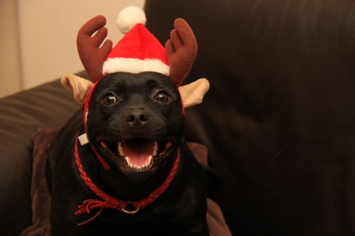 クリスマス19