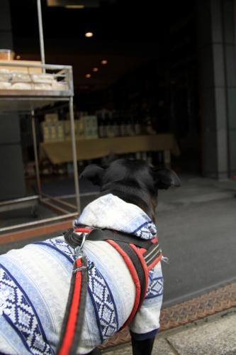 お散歩&お買い物6