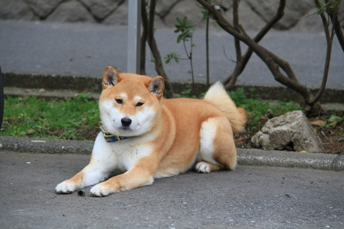 恒例の鎌倉3