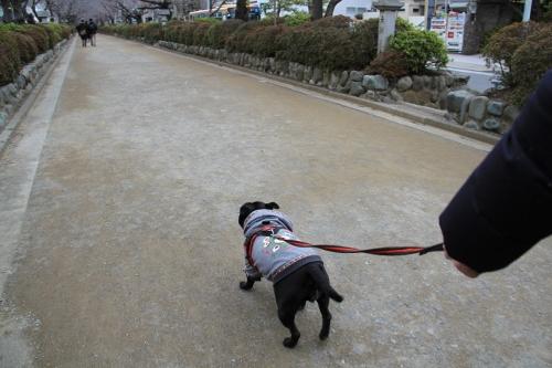 恒例の鎌倉11